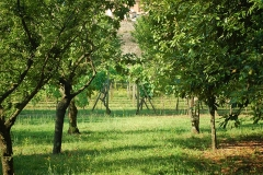Jardin San Domenico